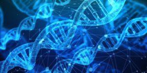 Die Rolle von Proteinen im Körper