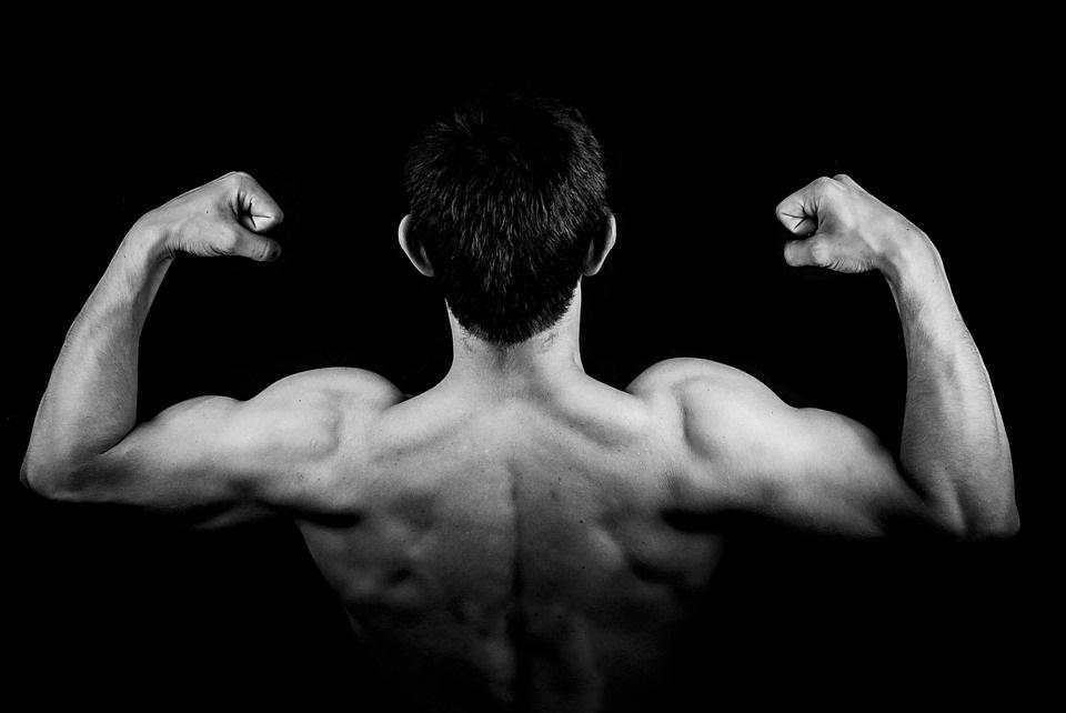 Muskelfunktion und Anatomie der Arme