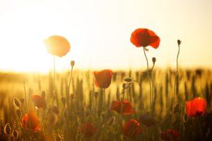 Warum machen uns Blumen glücklich?