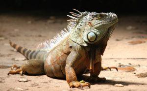 Coole Leckereien und coolere Reptilien