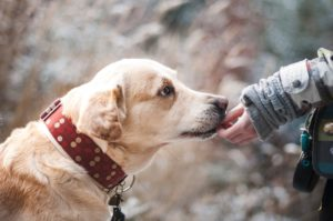Hundefutter-Trends: sinnvoll oder nicht?